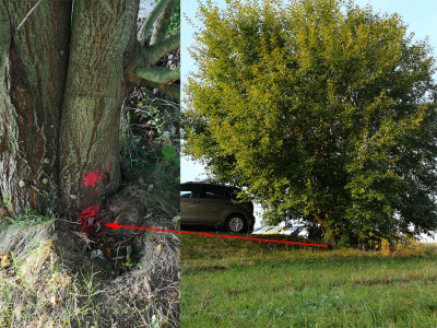 Grenzbäume pflanzen - Keine gute Idee